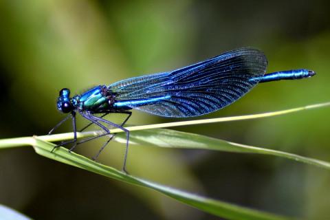 entomologie_2